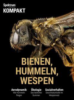 Spektrum Kompakt – Bienen, Hummeln, Wespen