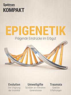 Spektrum Kompakt – Epigenetik 2