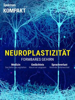 Spektrum Kompakt – Neuroplastizität