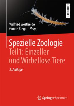 Spezielle Zoologie. Teil 1: Einzeller und Wirbellose Tiere von Lay,  Martin, Rieger,  Gunde, Rieger,  Reinhard, Westheide,  Wilfried
