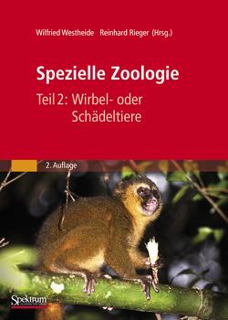 Spezielle Zoologie. Teil 2: Wirbel- oder Schädeltiere von Rieger,  Gunde, Westheide,  Wilfried