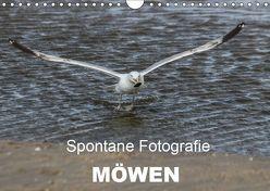 Spontane Fotografie – Möwen (Wandkalender 2019 DIN A4 quer) von MP,  Melanie
