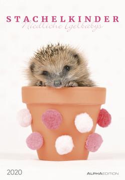 Stachelkinder – Niedliche Igelbabys 2020 – Bildkalender (24 x 34) – Tierkalender – Wandkalender – süße Tierbabys von ALPHA EDITION