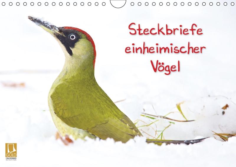 Steckbriefe Einheimischer Vögel Wandkalender 2018 Din A4 Quer Von F