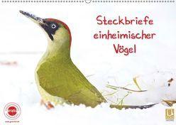 Steckbriefe einheimischer Vögel (Wandkalender 2019 DIN A2 quer) von Feske,  Klaus
