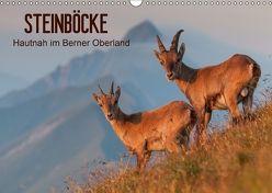 STEINBÖCKE Hautnah im Berner OberlandCH-Version (Wandkalender 2018 DIN A3 quer) von Trachsel,  Mario