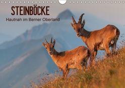 STEINBÖCKE Hautnah im Berner OberlandCH-Version (Wandkalender 2018 DIN A4 quer) von Trachsel,  Mario