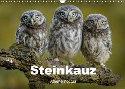 Steinkäuze (Athene noctua) (Wandkalender 2019 DIN A3 quer) von Rusch,  Winfried