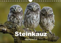 Steinkäuze (Athene noctua) (Wandkalender 2019 DIN A4 quer) von Rusch,  Winfried