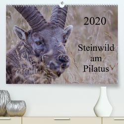 Steinwild am PilatusCH-Version (Premium, hochwertiger DIN A2 Wandkalender 2020, Kunstdruck in Hochglanz) von W. Saul,  Norbert