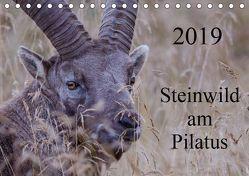 Steinwild am PilatusCH-Version (Tischkalender 2019 DIN A5 quer) von W. Saul,  Norbert