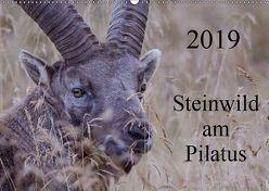 Steinwild am PilatusCH-Version (Wandkalender 2019 DIN A2 quer) von W. Saul,  Norbert