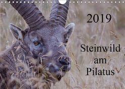 Steinwild am PilatusCH-Version (Wandkalender 2019 DIN A4 quer) von W. Saul,  Norbert