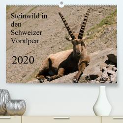 Steinwild in den Schweizer Voralpen (Premium, hochwertiger DIN A2 Wandkalender 2020, Kunstdruck in Hochglanz) von W. Saul,  Norbert