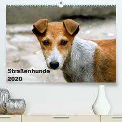 Straßenhunde (Premium, hochwertiger DIN A2 Wandkalender 2020, Kunstdruck in Hochglanz) von Bakker,  Antje