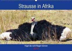Strausse in Afrika (Wandkalender 2019 DIN A2 quer) von Fraatz,  Barbara