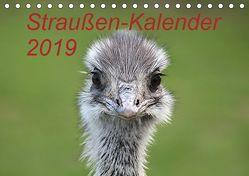 Straußen-Kalender 2019 (Tischkalender 2019 DIN A5 quer) von Witkowski,  Bernd