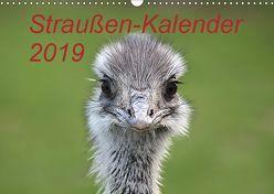 Straußen-Kalender 2019 (Wandkalender 2019 DIN A3 quer) von Witkowski,  Bernd
