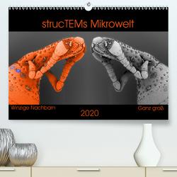 strucTEMs Mikrowelt – Winzige Nachbarn ganz groß (Premium, hochwertiger DIN A2 Wandkalender 2020, Kunstdruck in Hochglanz) von Braun,  Nathalie, strucTEM