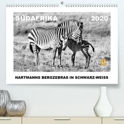 SÜDAFRIKA Hartmanns Bergzebras in schwarz-weiss (Premium, hochwertiger DIN A2 Wandkalender 2020, Kunstdruck in Hochglanz) von Thula