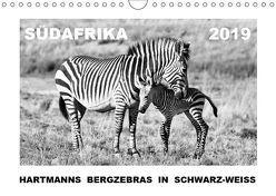 SÜDAFRIKA Hartmanns Bergzebras in schwarz-weiss (Wandkalender 2019 DIN A4 quer) von Thula