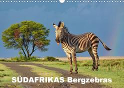 SÜDAFRIKAS Bergzebras (Wandkalender 2020 DIN A3 quer) von Thula