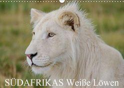 SÜDAFRIKAS Weiße Löwen (Wandkalender 2019 DIN A3 quer) von Thula