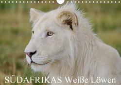 SÜDAFRIKAS Weiße Löwen (Wandkalender 2020 DIN A4 quer) von Thula