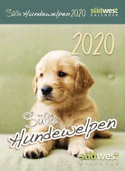 Süße Hundewelpen 2020 Tagesabreißkalender