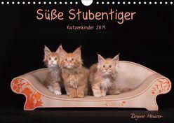 Süße Stubentiger – Katzenkinder (Wandkalender 2019 DIN A4 quer) von Heuser,  Regine