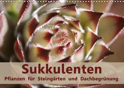 Sukkulenten – Pflanzen für Steingärten und Dachbegrünung (Wandkalender 2020 DIN A3 quer) von Lorz - LoRo-Artwork,  Rosi