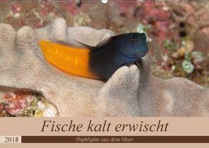 Sven Gruse taucht ab! Fische kalt erwischt (Wandkalender 2018 DIN A2 quer) von Gruse,  Sven
