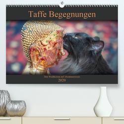 Taffe Begegnungen-Drei Waldkatzen auf Abenteuerreisen (Premium, hochwertiger DIN A2 Wandkalender 2020, Kunstdruck in Hochglanz) von Gross,  Viktor
