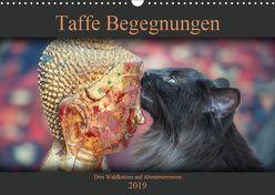 Taffe Begegnungen-Drei Waldkatzen auf Abenteuerreisen (Wandkalender 2019 DIN A3 quer) von Gross,  Viktor