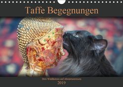 Taffe Begegnungen-Drei Waldkatzen auf Abenteuerreisen (Wandkalender 2019 DIN A4 quer)
