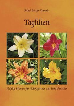 Taglilien von Bürger-Rasquin,  Rahel