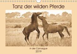 Tanz der wilden Pferde in der Camargue (Wandkalender 2019 DIN A4 quer) von Bölts,  Meike