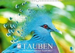 Tauben: die Schönsten aus aller Welt (Wandkalender 2018 DIN A3 quer) von CALVENDO,  k.A.