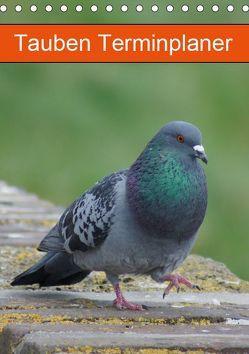 Tauben Terminplaner (Tischkalender 2019 DIN A5 hoch) von kattobello