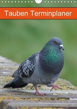 Tauben Terminplaner (Wandkalender 2018 DIN A4 hoch) von Kattobello,  k.A.