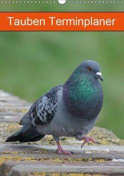 Tauben Terminplaner (Wandkalender 2019 DIN A3 hoch) von kattobello