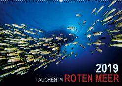 Tauchen im Roten Meer 2019 (Wandkalender 2019 DIN A2 quer) von Strozynski,  Bartosz