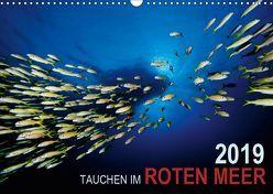 Tauchen im Roten Meer 2019 (Wandkalender 2019 DIN A3 quer) von Strozynski,  Bartosz