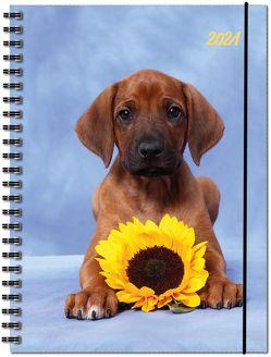 Terminplaner Hund 2021 von Diverse