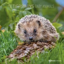 Tierbabys 2020 – Baby Animals – Wandkalender – Broschürenkalender (30 x 60 geöffnet) – Tierkalender – Wandplaner von ALPHA EDITION