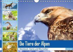 Tiere der Alpen: Steinbock, Gams und Murmeltier (Wandkalender 2018 DIN A4 quer) von CALVENDO,  k.A.