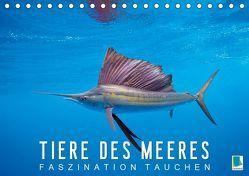 Tiere des Meeres: Faszination Tauchen (Tischkalender 2019 DIN A5 quer) von CALVENDO