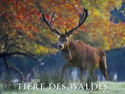 Tiere des Waldes 2020 – Bildkalender quer (56 x 42) – Tierkalender – Wald – Natur – Wandkalender von ALPHA EDITION