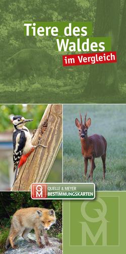 Tiere des Waldes im Vergleich von Quelle & Meyer Verlag