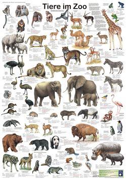 Tiere im Zoo von Welter-Schultes,  F W